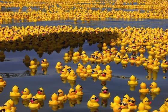 Rubber ducky in the sea